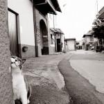 """© copyright Marco Galli. """"Ruffiano"""", con Gatto Mirò"""